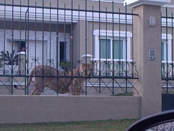 busao curitiba leoa2